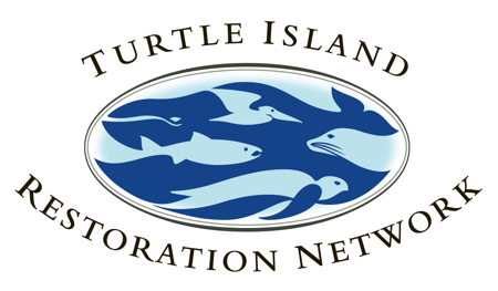 SeaTurtles.org Logo
